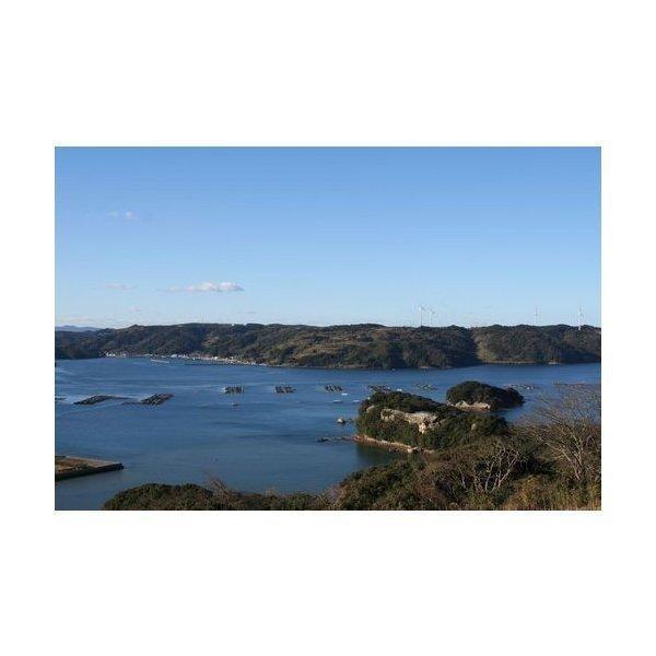【送料無料】【仮屋漁業組合】玄海町サザエ(1.5キロ)|qtsuhanshop|04