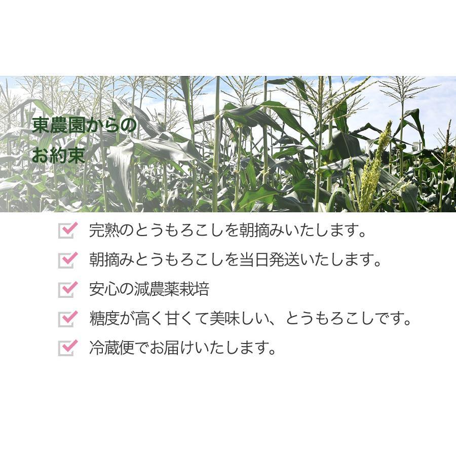 完熟とうもろこし(ゴールドラッシュ)3L〜4L・1箱10本入(送料込) qu-shop 03