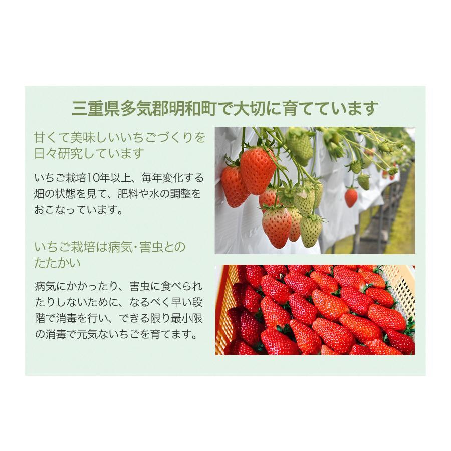冷凍いちご章姫(あきひめ)約2kg入【東農園生産】|qu-shop|04