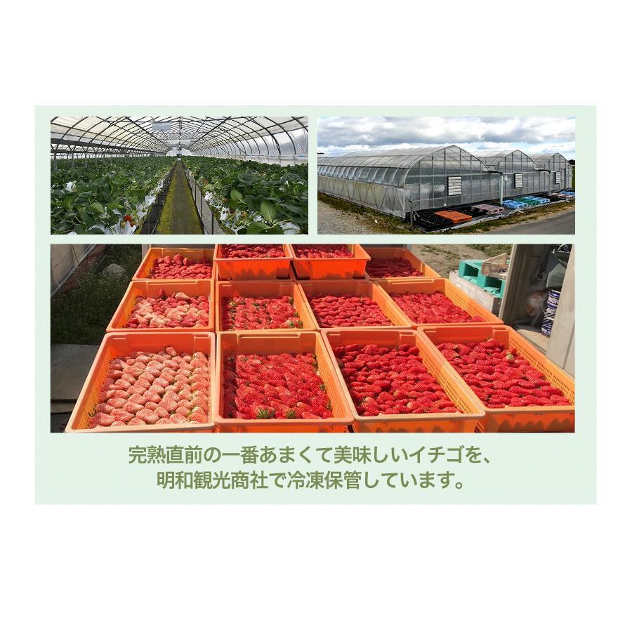 冷凍いちご章姫(あきひめ)約2kg入【東農園生産】|qu-shop|05