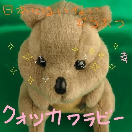 新作ぬいぐるみ世界一幸せな動物【クオッカワラビー】日本製オリジナルぬいぐるみ23センチ|rabbittail-net|03