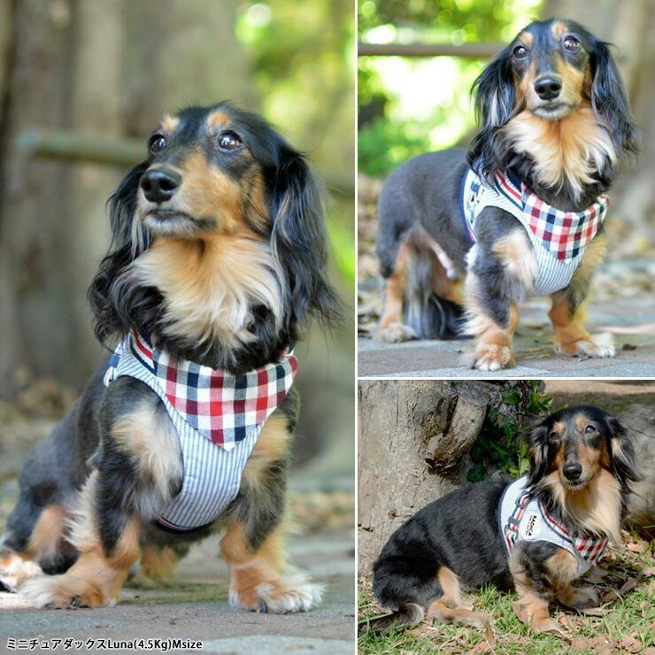 セール SALE 犬 ハーネス ラディカ RADICAハーネス L LL FBサイズ メール便可|radica|11