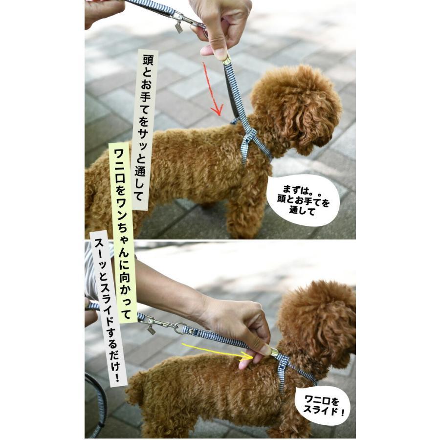 新色入荷 セール SALE 犬 ハーネス ラディカ RADY クラシックハーネス&リード 犬の胴輪 メール便可|radica|06