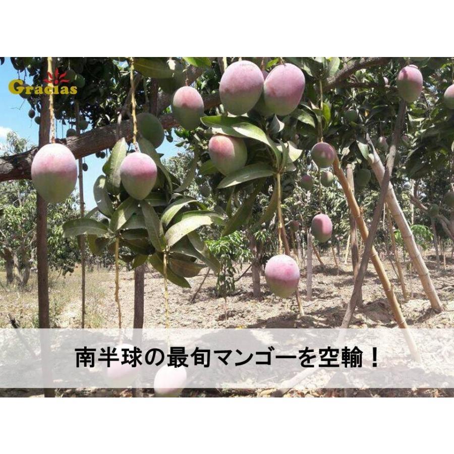 グラシアスマンゴー (ペルー産ケント種)特大6玉入(約3kg)|rainbowfresh-online|05