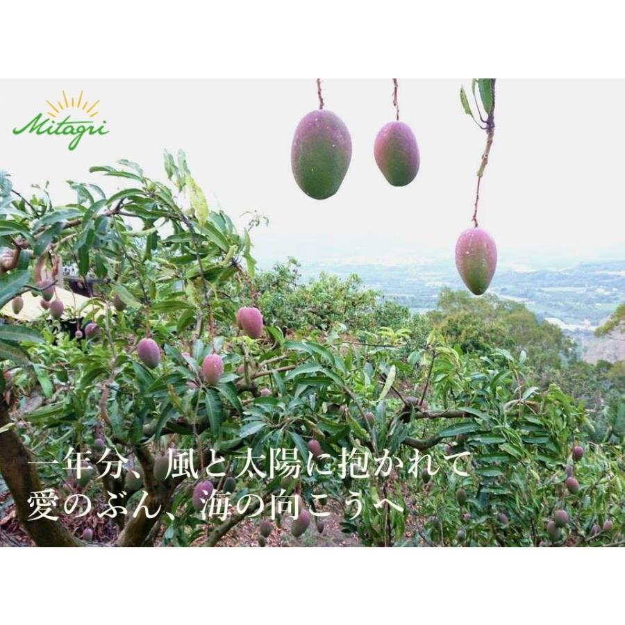 【先行予約特価】【完売御礼】【数量限定】【Mitagri】台湾マンゴー(5kg 10〜16玉) rainbowfresh-online 02