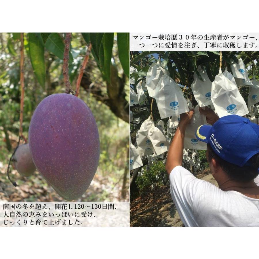 【先行予約特価】【完売御礼】【数量限定】【Mitagri】台湾マンゴー(5kg 10〜16玉) rainbowfresh-online 03
