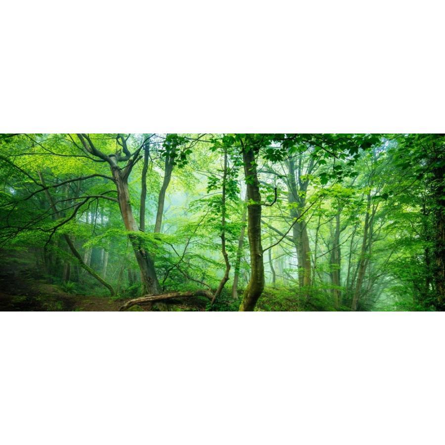 絵画風 壁紙ポスター 新緑の森 森林 森の小道 イギリスの自然 もののけ