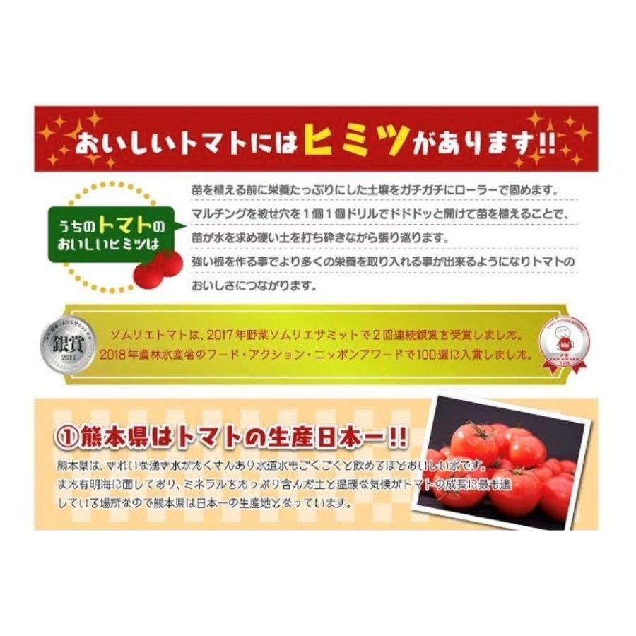 トマト 送料無料 九州 熊本産  ソムリエトマト 2.6kgもぎたてを順次発送 6月20日まで|redup|05