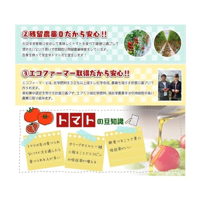 トマト 送料無料 九州 熊本産  ソムリエトマト 2.6kgもぎたてを順次発送 6月20日まで|redup|06