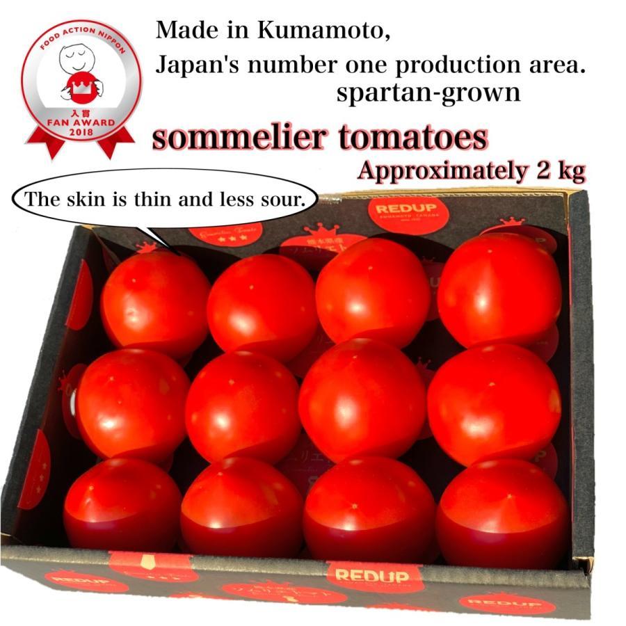 トマト 送料無料 九州 熊本産  ソムリエトマト 1.3kgもぎたてを順次発送 6月20日まで|redup|02