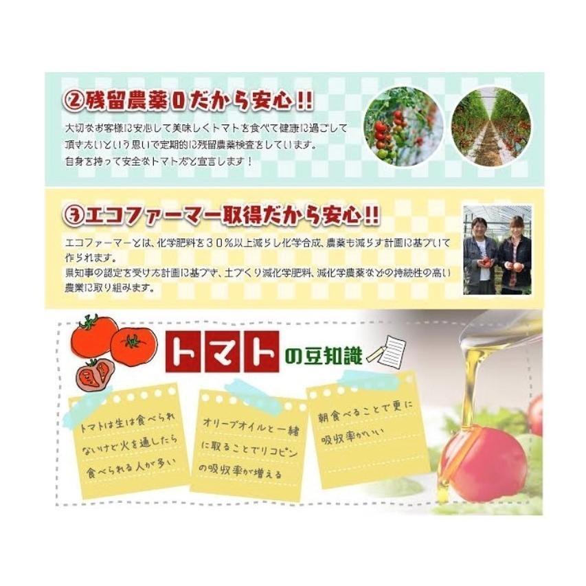 トマト 送料無料 九州 熊本産  ソムリエトマト 1.3kgもぎたてを順次発送 6月20日まで|redup|06