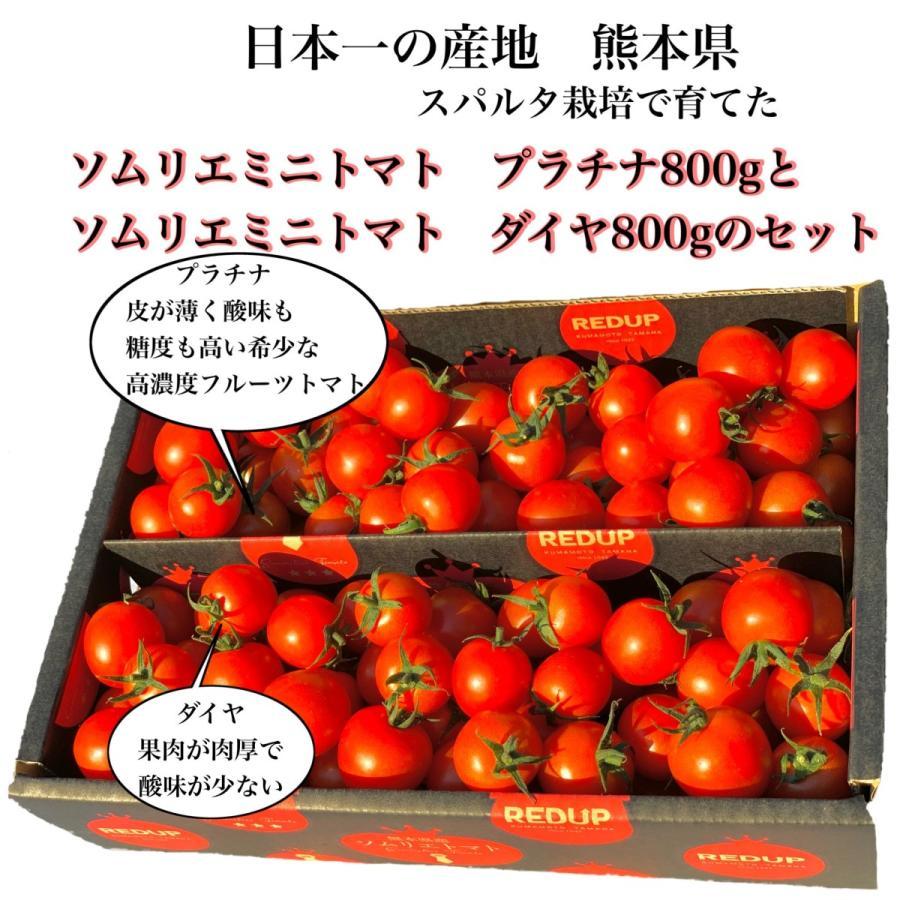 トマト 送料無料 九州 熊本産 ソムリエトマトとミニトマトのセット もぎたてを順次発送 6月20日まで|redup