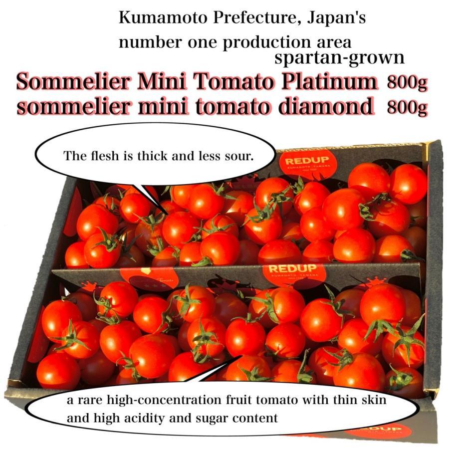 トマト 送料無料 九州 熊本産 ソムリエトマトとミニトマトのセット もぎたてを順次発送 6月20日まで|redup|02