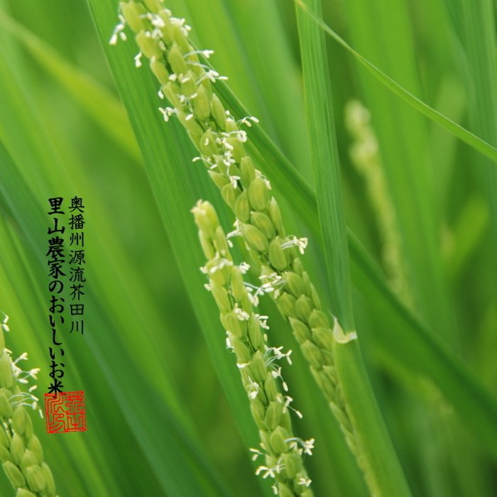新米 お米 10kg 白米〜分づき精米 送料無料 清流きぬひかり芥田川 農家直送 米農家の低温精米 5分づき 7分づき 白米 上白|rice-jp2|16