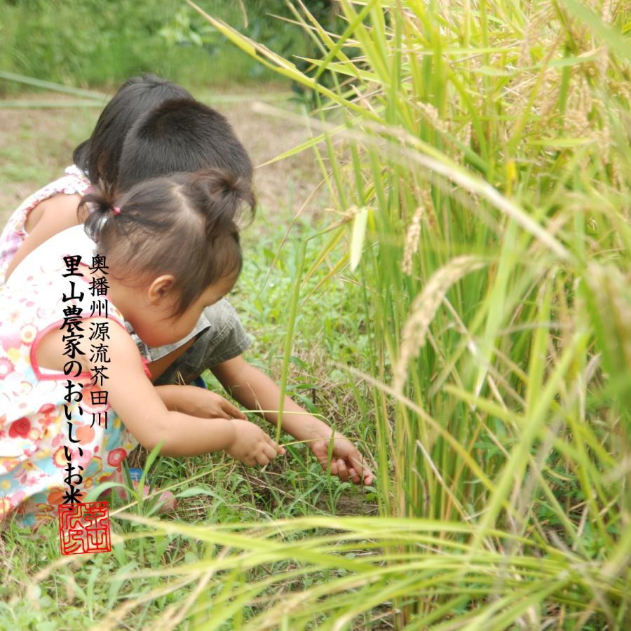 新米 お米 10kg 白米〜分づき精米 送料無料 清流きぬひかり芥田川 農家直送 米農家の低温精米 5分づき 7分づき 白米 上白|rice-jp2|18