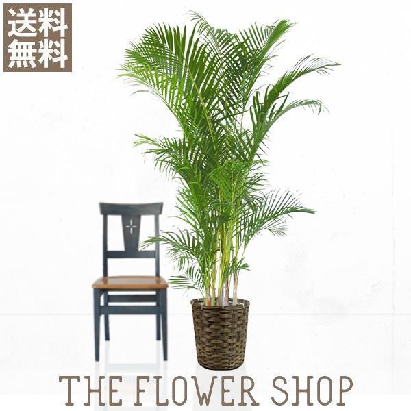 観葉植物 おしゃれ 直輸入品激安 アレカヤシ 日本正規代理店品 籐カゴ 高さ:約150〜170cm