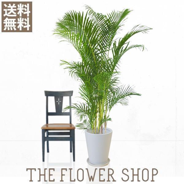観葉植物 おしゃれ アレカヤシ 高さ:約150〜170cm 陶器鉢|ricochet-petit