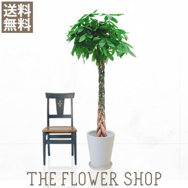 観葉植物 おしゃれ パキラ 高さ:約150〜170cm 陶器鉢 ricochet-petit