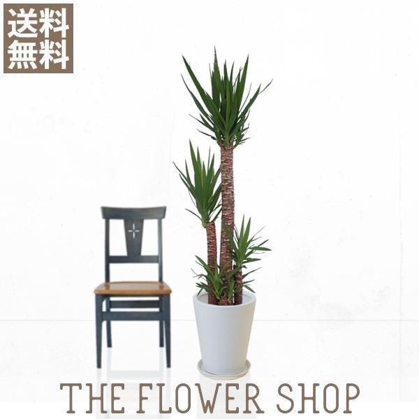 観葉植物 おしゃれ ユッカ(青年の木) 高さ:約150〜170cm 陶器鉢 ricochet-petit