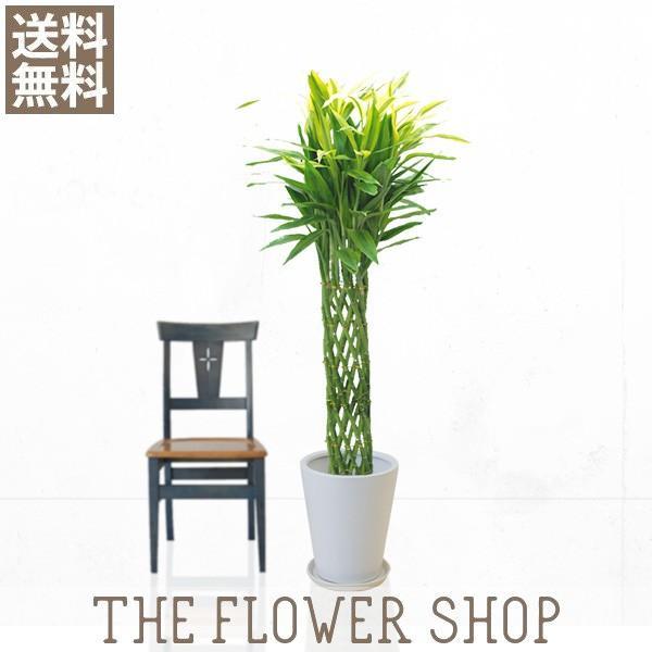 観葉植物 おしゃれ ミリオンバンブー 高さ:約150〜170cm 陶器鉢 ricochet-petit