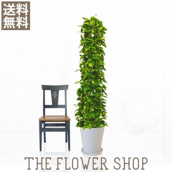 観葉植物 おしゃれ ポトスタワー 高さ:約150〜170cm 陶器鉢|ricochet-petit