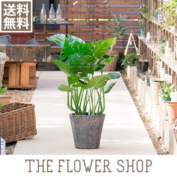 観葉植物 おしゃれ モンステラ 高さ:約80〜100cm [陶器鉢] ricochet-petit