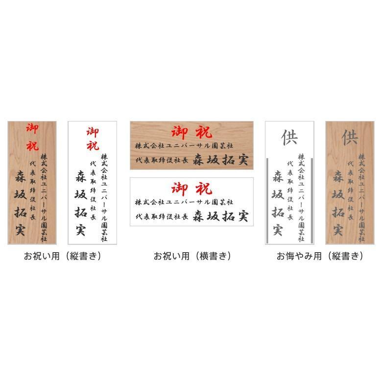 観葉植物 おしゃれ モンステラ 高さ:約80〜100cm [陶器鉢] ricochet-petit 03
