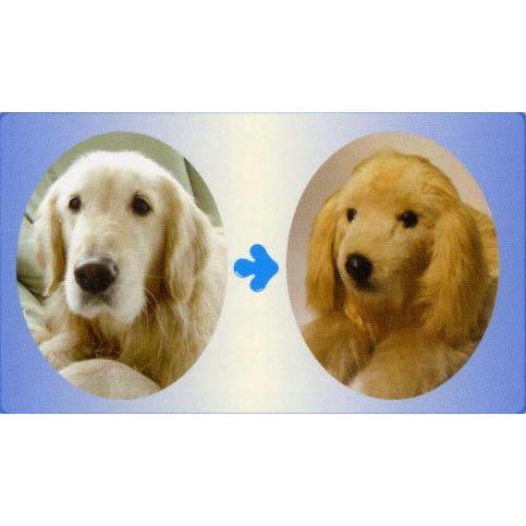 ウェイトドッグ&キャット「オーダーメイド·愛犬の写真から再現」