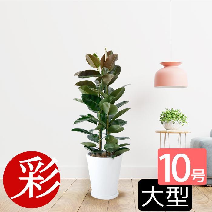 通販 観葉 植物