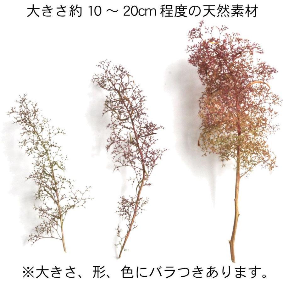オランダドライフラワー(スーパーツリー Super Trees) :シーニックエクスプレス キット ノンスケール 214 sakatsu 02