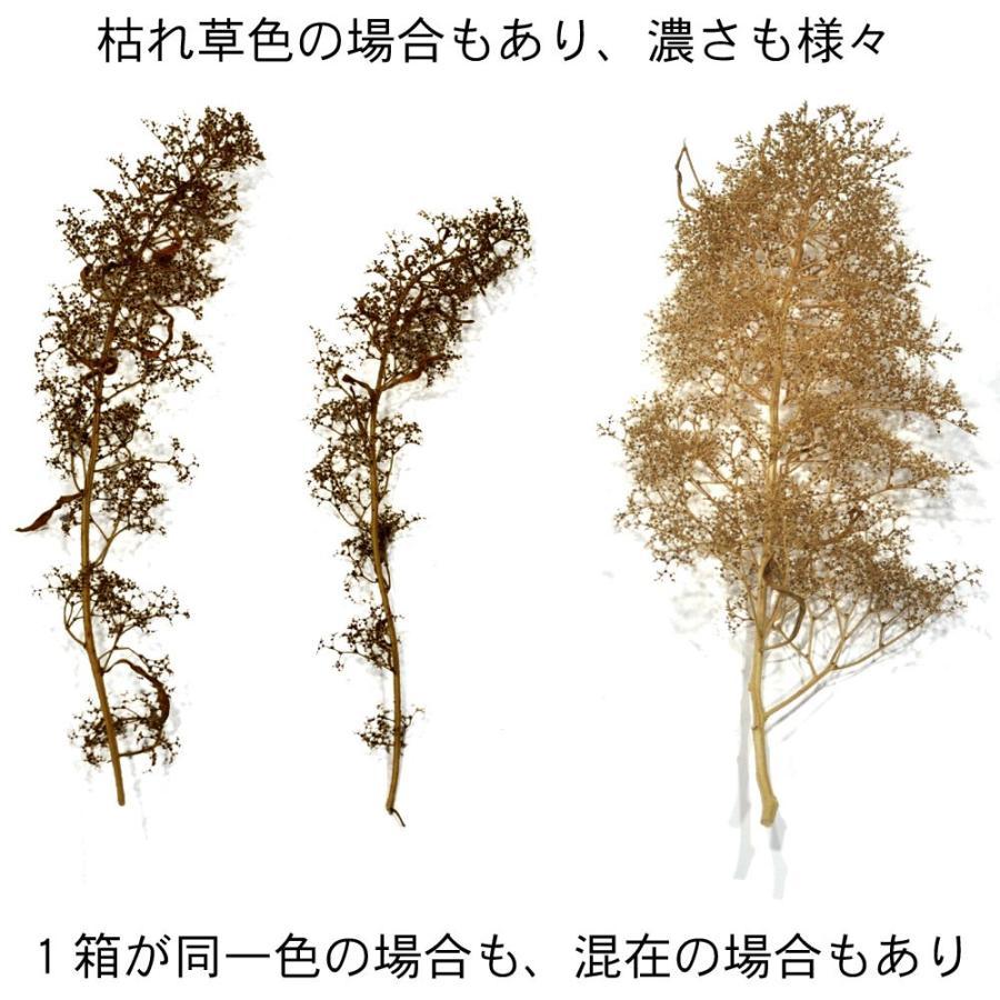 オランダドライフラワー(スーパーツリー Super Trees) :シーニックエクスプレス キット ノンスケール 214 sakatsu 03