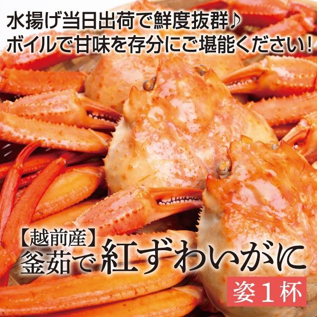 【訳あり】越前産 茹で紅ズワイガニ姿1杯(600〜800g)獲れたて浜茹でを即日発送!【冷蔵便】 sakudaya 02