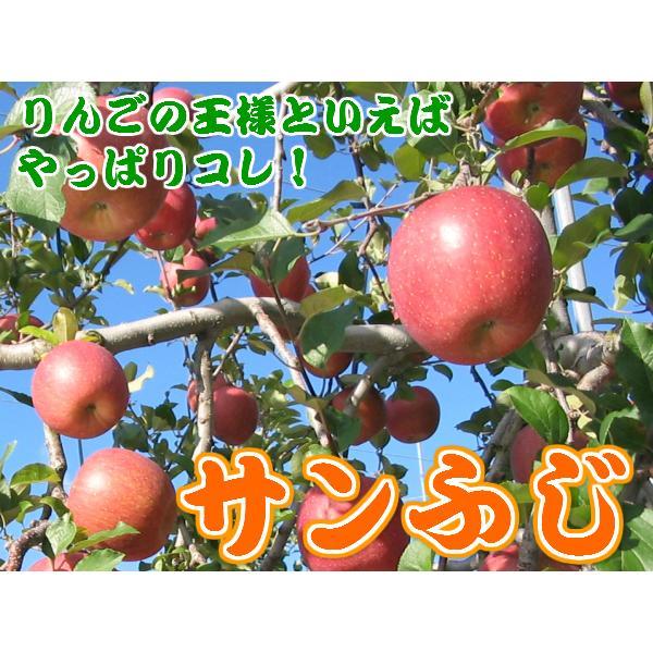 りんご 訳あり 1 0kg 青森県産 サンふじ 家庭用 キズあり 10kg (CA貯蔵)|sakuraba-apple|02