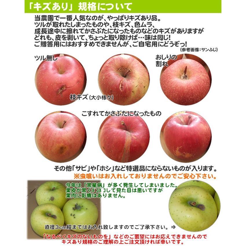 りんご 訳あり 1 0kg 青森県産 サンふじ 家庭用 キズあり 10kg (CA貯蔵)|sakuraba-apple|05