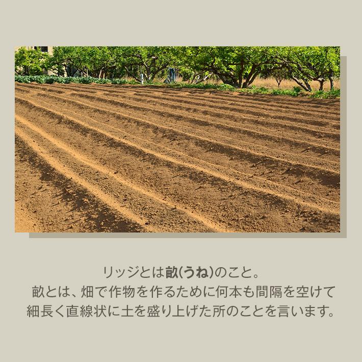 キッチンマット 45cm×180cm 「コットンリッジ」 綿100% 滑り止め 日本製 洗える アイボリー 45×180|san-luna|03