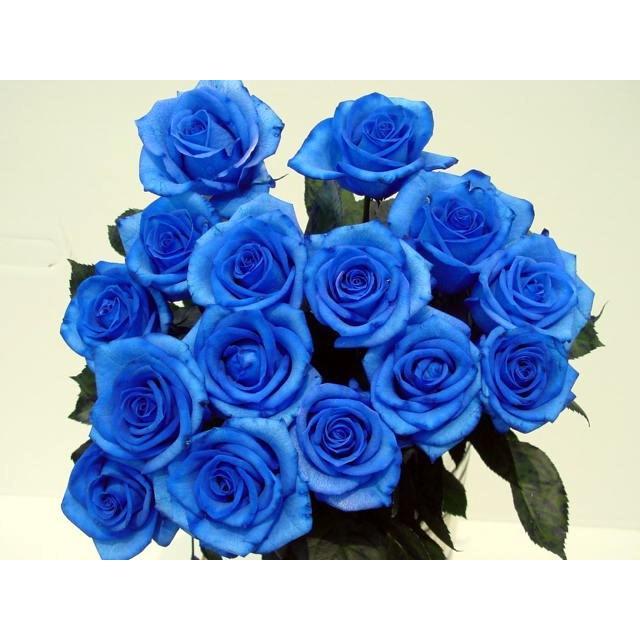 """ベンデラブルー""""青いバラ 青バラ 生花 誕生日の花 :732070:花と ..."""
