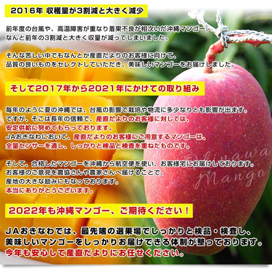 沖縄県より産地直送 JAおきなわ 完熟マンゴー 秀品 2Lサイズ×2玉 合計700g (約350g×2玉) 送料無料 まんごー アップルマンゴー 沖縄マンゴー sanchimarugotoouen 05