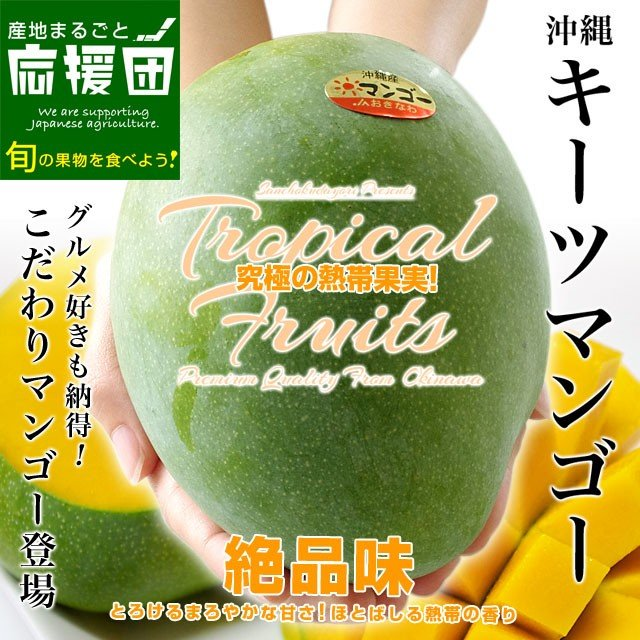 送料無料 沖縄県より産地直送 JAおきなわ キーツマンゴー 約800g 化粧箱 まんごー sanchimarugotoouen