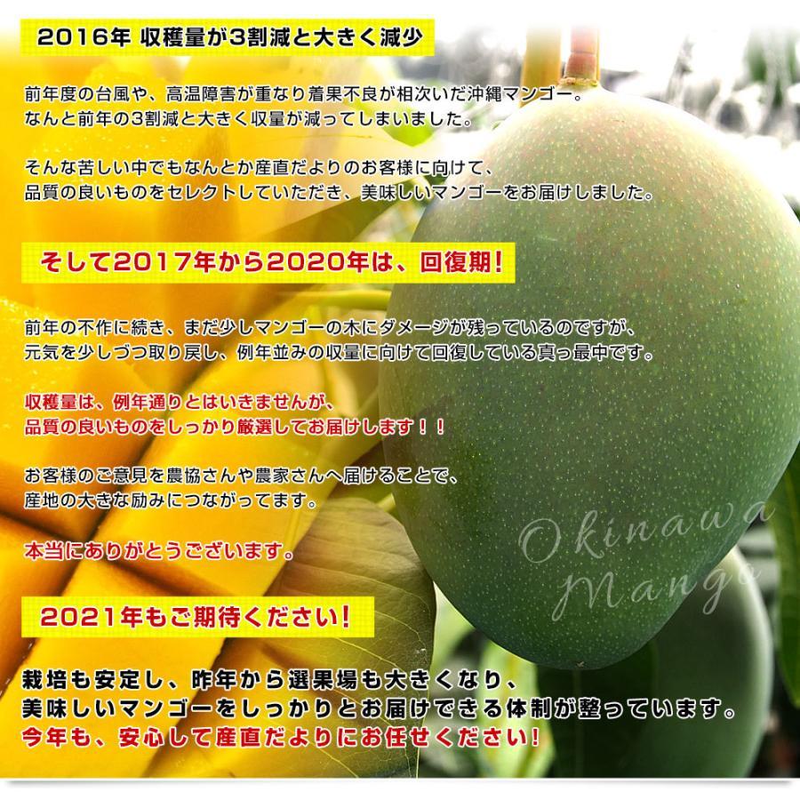 送料無料 沖縄県より産地直送 JAおきなわ キーツマンゴー 約800g 化粧箱 まんごー sanchimarugotoouen 05