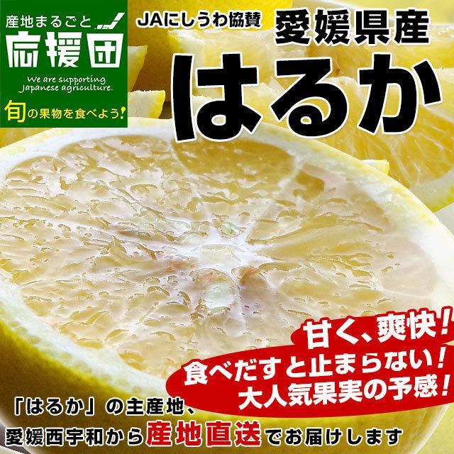 愛媛県より産地直送 JAにしうわ はるか LからMサイズ 5キロ (30から34玉)  送料無料 柑橘 オレンジ ハルカ 西宇和 八幡浜|sanchimarugotoouen