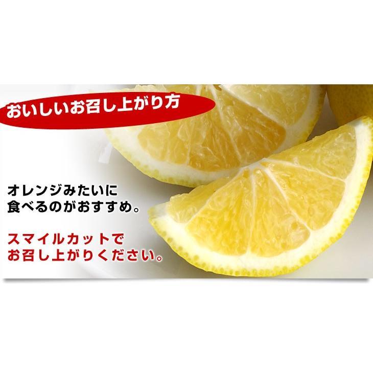 愛媛県より産地直送 JAにしうわ はるか LからMサイズ 5キロ (30から34玉)  送料無料 柑橘 オレンジ ハルカ 西宇和 八幡浜|sanchimarugotoouen|05