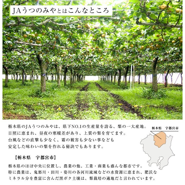 栃木県より産地直送 JAうつのみやの梨 大玉限定 4Lサイズ以上 秀品 約5キロ (7玉から12玉) 送料無料 ※品種をお選びください。|sanchokudayori|04