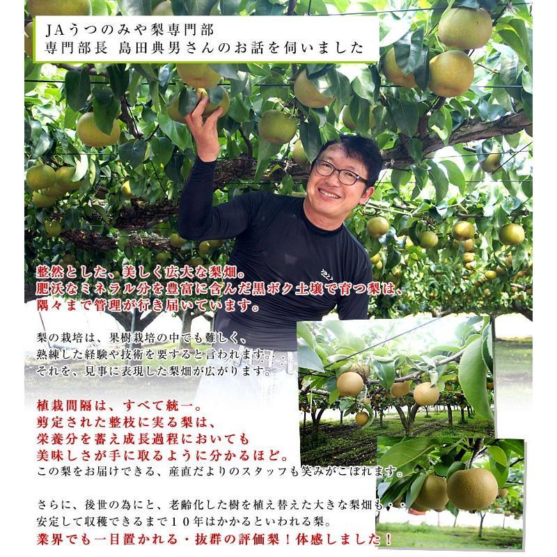 栃木県より産地直送 JAうつのみやの梨 大玉限定 4Lサイズ以上 秀品 約5キロ (7玉から12玉) 送料無料 ※品種をお選びください。|sanchokudayori|05