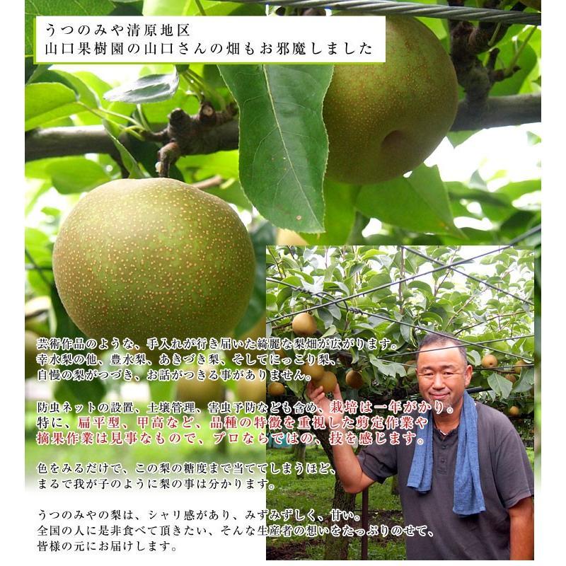 栃木県より産地直送 JAうつのみやの梨 大玉限定 4Lサイズ以上 秀品 約5キロ (7玉から12玉) 送料無料 ※品種をお選びください。|sanchokudayori|06