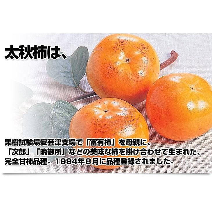 熊本県より産地直送 JAあしきた 太秋柿 3.5キロ(8玉から14玉) 送料無料 柿 かき|sanchokudayori|03