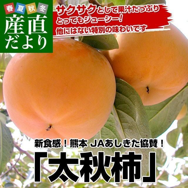 熊本県より産地直送 JAあしきた 太秋柿 2キロ(5玉から6玉) 送料無料 柿 かき sanchokudayori
