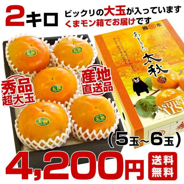 熊本県より産地直送 JAあしきた 太秋柿 2キロ(5玉から6玉) 送料無料 柿 かき sanchokudayori 02