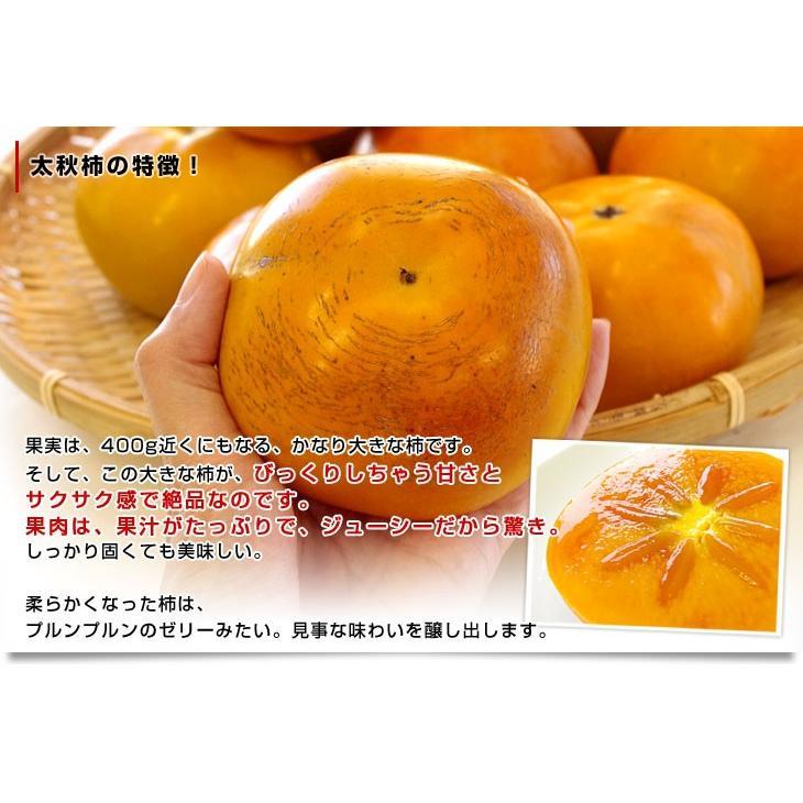 熊本県より産地直送 JAあしきた 太秋柿 2キロ(5玉から6玉) 送料無料 柿 かき sanchokudayori 04