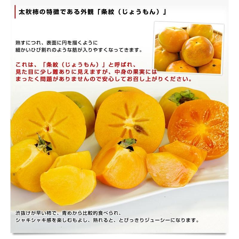 熊本県より産地直送 JAあしきた 太秋柿 2キロ(5玉から6玉) 送料無料 柿 かき sanchokudayori 05