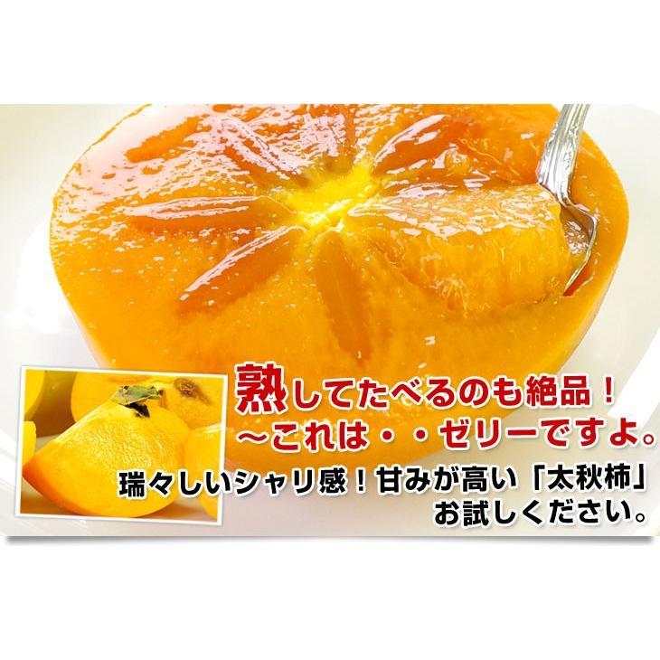 熊本県より産地直送 JAあしきた 太秋柿 2キロ(5玉から6玉) 送料無料 柿 かき sanchokudayori 06